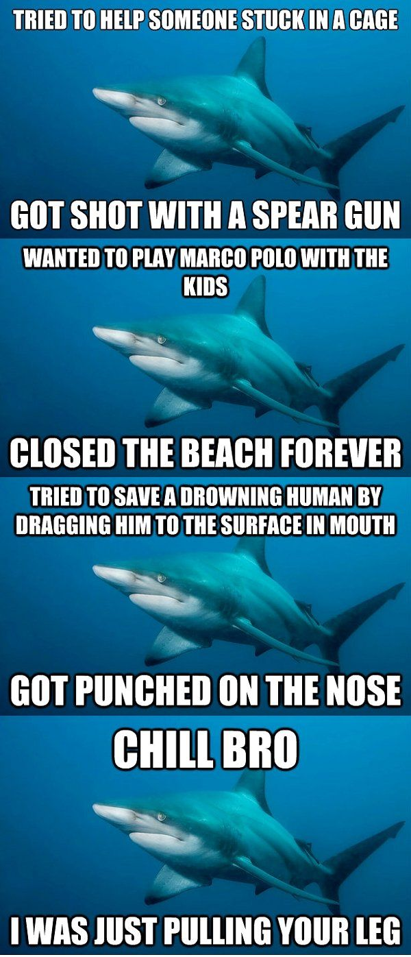 Misunderstood Shark Meme