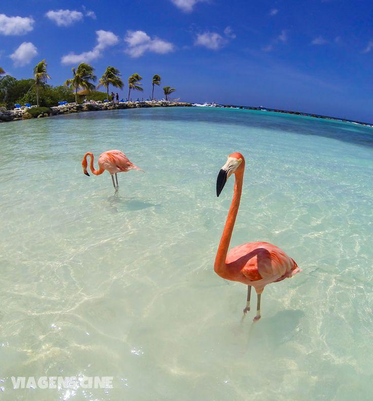 O que fazer em Aruba: a Flamingo Beach fica na Renaissance Island e é um dos passeios incríveis para se fazer no Caribe. Confira algumas dicas e nosso roteiro de viagem em Aruba e pelo Caribe no blog