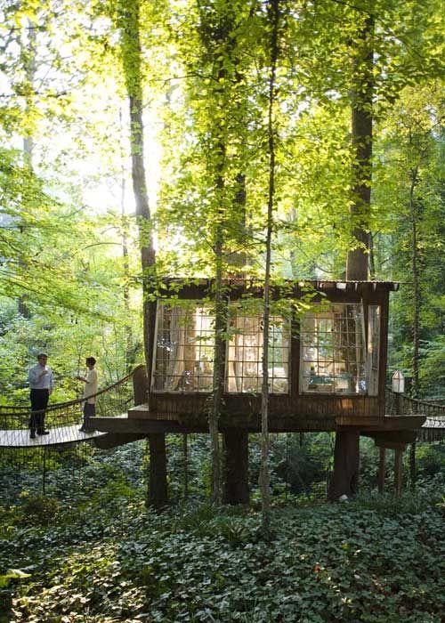 adult treehouse.