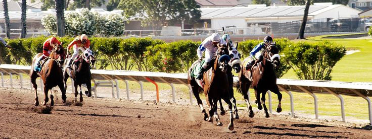 Alameda County Fairgrounds Live Horse Racing
