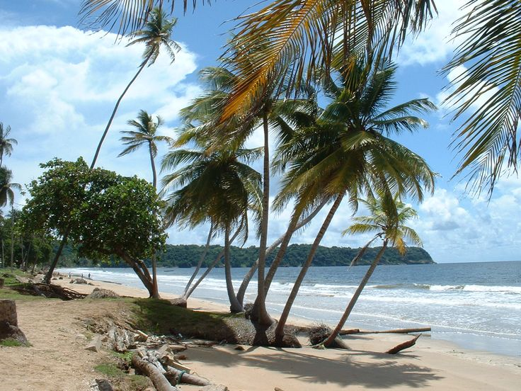 Coconut palms on Mayaro Beach, Trinidad Island