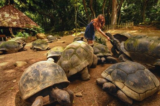 Feed gigantic turtle in Seychelles. Top things to do in Seychelles. Find out the best tip and tricks before you visit Seychelles
