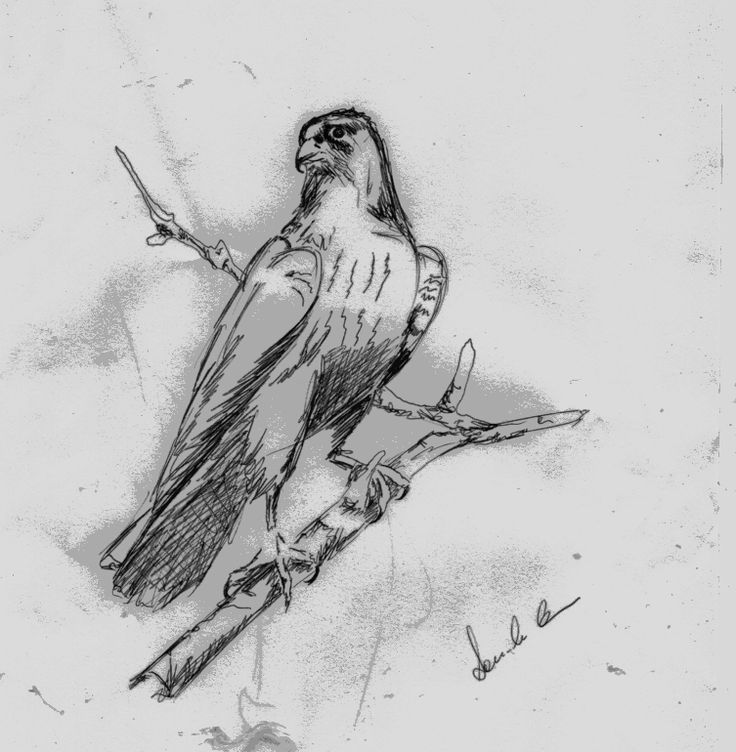 Un rapace coscente...  by Daniele Coccu