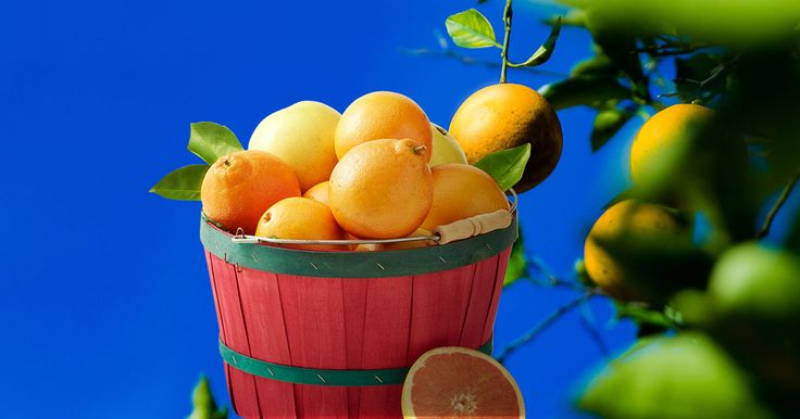 Order fruit online straight from a citrus grower. Buy Florida Oranges and Grapefruits directly from the source, learn more today!