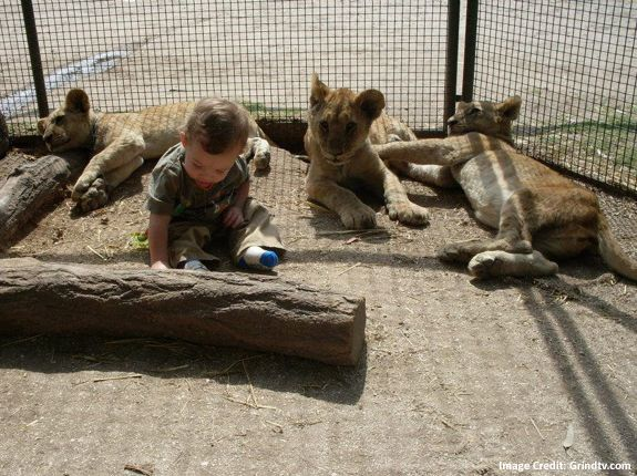 Cuddle, Feed and Play with Wild Animals in Lujan Zoo Argentina