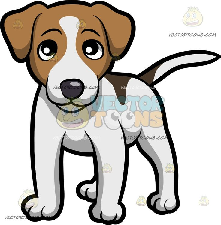 how to take care of a jack russell puppy