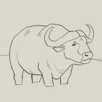 How to draw water buffalo