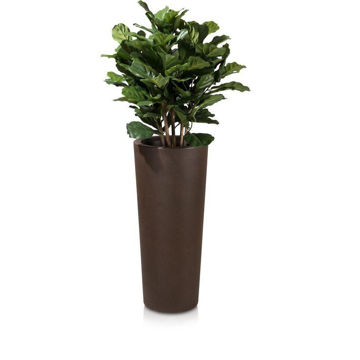 Eine schlanke, konische Form und die Verwendung hochwertiger Kunststoff-Materialien sind die Merkmale, die den Pflanzkübel CONO 90 in Bronze am treffendsten beschreiben. Mit einer Höhe von 90 cm und einem Durchmesser von 40 cm sind die Abmessungen des Kunststoff-Blumenkübels großzügig gewählt. Mit seinem modernen Design und der schlanken Silhouette eignet sich der CONO 90 perfekt für die Gestaltung von Eingangsbereichen, aber auch im Garten wertet er so manche markante Ecke optisch auf.