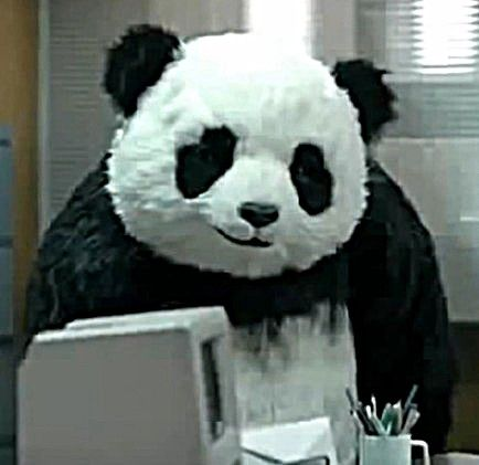 "Never Say ""No"" to Panda -- The Animal Video of the Day!!!  ... from PetsLady.com ... The FUN site for Animal Lovers"