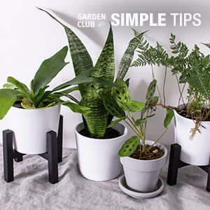 Give Plants a Lift: DIY Mini Plant Stand | Garden Club