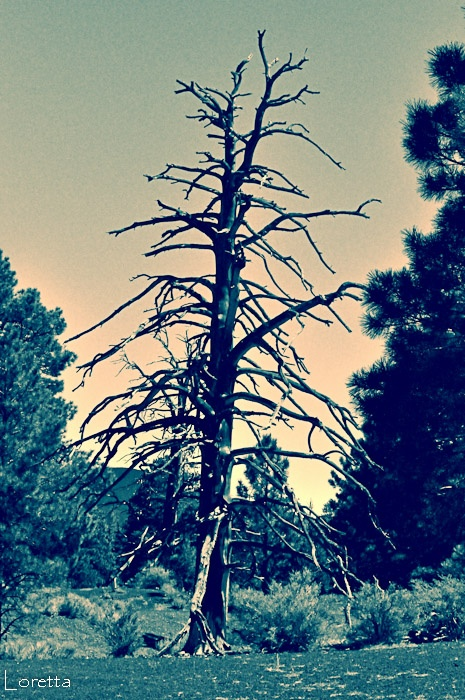 Love for dead trees