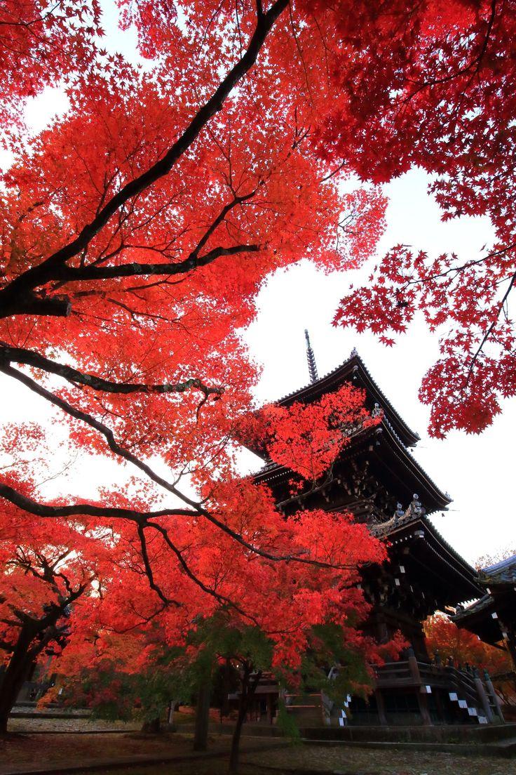 真如堂 紅葉 伽藍を染める圧倒的な秋の彩り