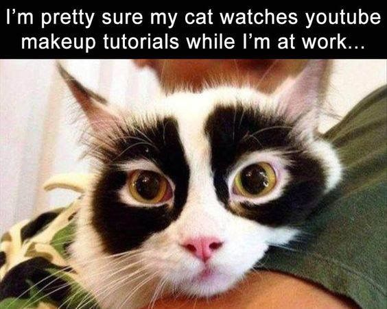 Funny Cat Meme About Work : Things only cat owners will understand