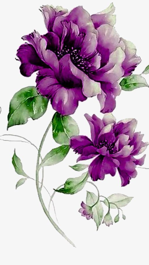 Purple flowers, Purple, Flowers, The Story PNG and PSD