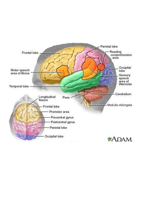 Damage to the frontal lobe is most commonly caused by a stroke or TIA.