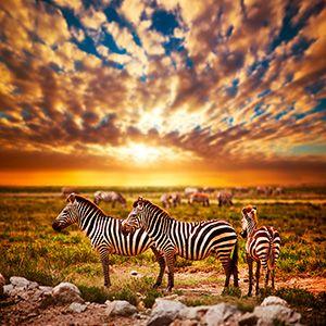 Serengeti National Park in Tanzania, Africa
