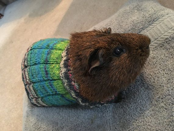 Guinea Pig Sweater Knitting Pattern : 10 best images about My Etsy Shop on Pinterest Dinosaur hat, Winter hats an...
