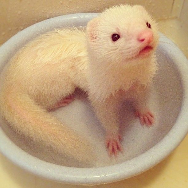 'Take A Ferret, Leave A Ferret' Trays No Longer In Use