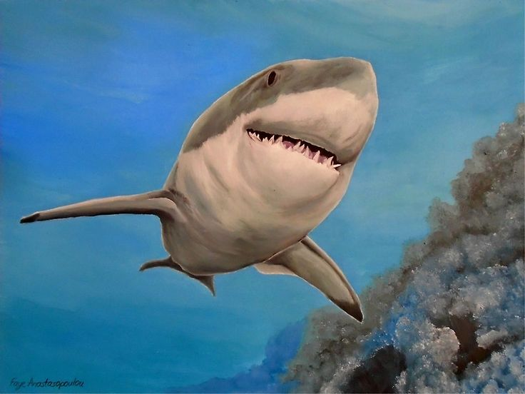 Shark, painting,  underwater,world,scene,seascape,fish,wall,art,ocean,life,blue,nature,sea,great white shark,tropical,deep,ocean,saltwater,marine,animal,wildlife,home,office,decor,beautiful,awesome,artwork,modern,aqua,blue,turquoise,beautiful,images,fine,art,oil,contemporary,realism,figurative,items,ideas,for sale,redbubble