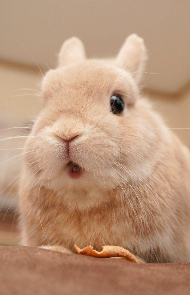 25 Best Ideas About Rabbits On Pinterest Pet Bunny