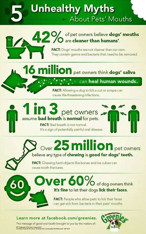 5 surprising myths about dog´s mouth