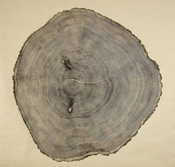 treeringsTrees Rings, Wood Art, Trees Trunks, Diy Crafts, Bryans Nash, Art Prints, Amazing Nature, Trees Stumps, Nash Gill
