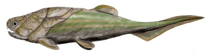 The Placodermi were prehistoric fishes. Placoderms were some of the first jawed fishes (Gnathostomata), their jaws evolving from the first gill arch. Coccosteus BW - Timeline of human evolution - Wikipedia, the free encyclopedia