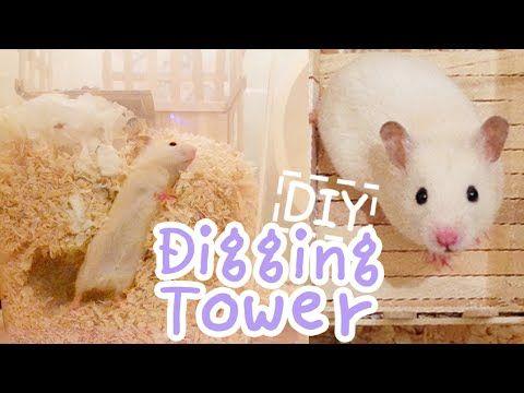 ☆HAMSTER DIY☆ Digging Tower - YouTube