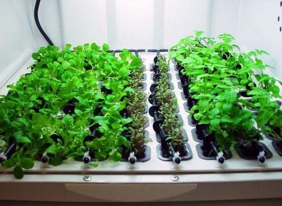 Indoor Hydroponic Vegetable Garden