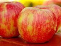 Information on growing Honeycrisp apple trees