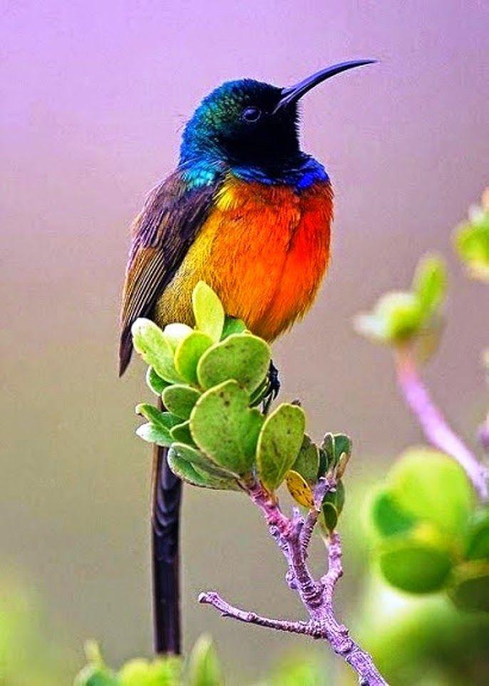 South Texas Natural History Parrot