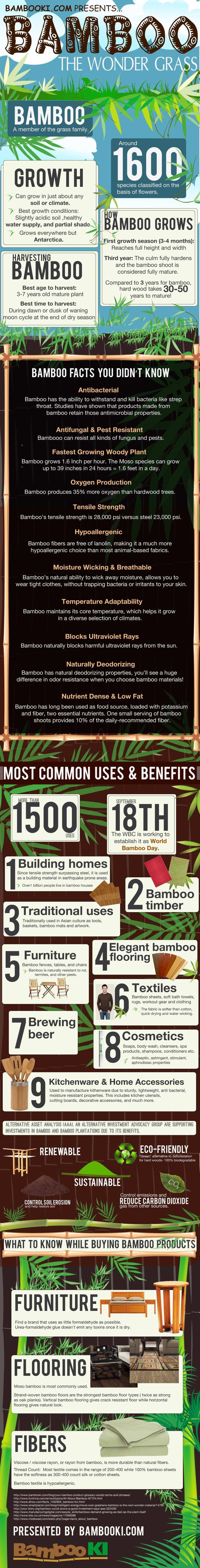 Bamboo: The Wonder Grass