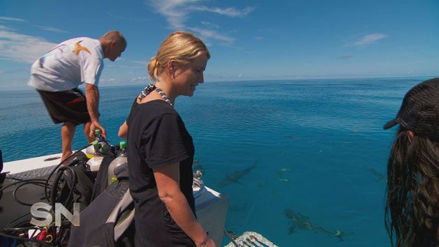 A new way to handle sharks? - Yahoo7