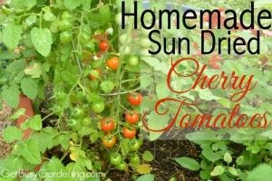 Take full advantage of your vegetable garden with fresh sun-dried cherry tomatoes, perfect for a light snack. If you have a large harvest, try freezing or canning them to save for later. All great ideas, thanks to Get Busy Gardening.