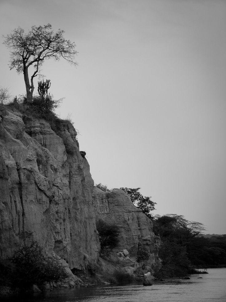 Lonely tree / Magányos fa Photo: Kata Tumbász
