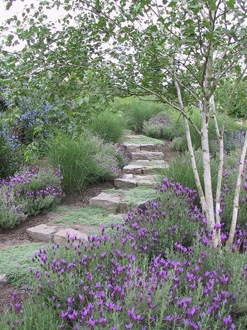 Ohh I do love this look. One tree to shade the pathway lined with Lavender....