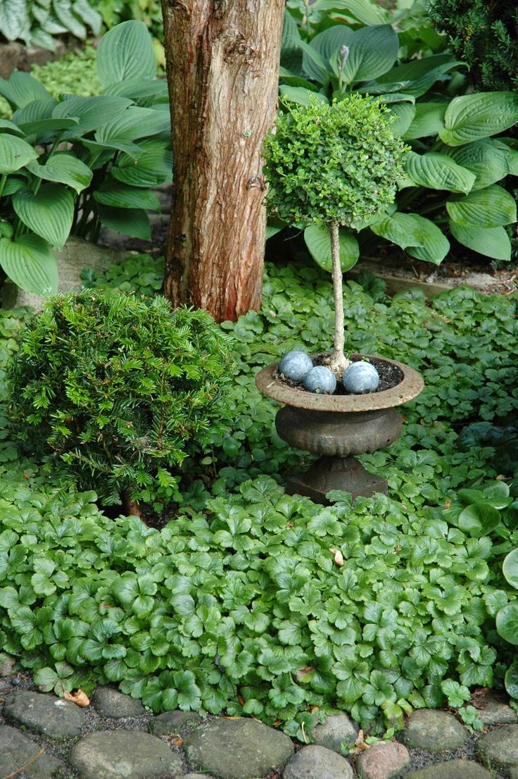 hostas and topiary with spheres...