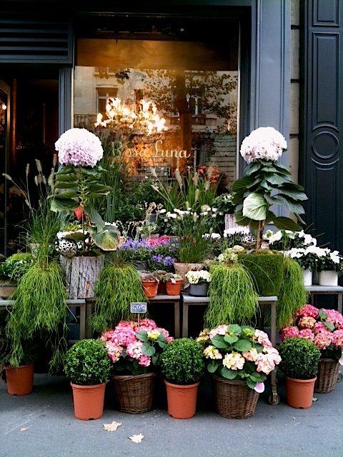 Rosa Luna, a pretty garden and floral shop, on the Left Bank, Paris, France