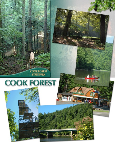 Places To Camp Pa: 63 Best Images About Cook Forest, PA On Pinterest