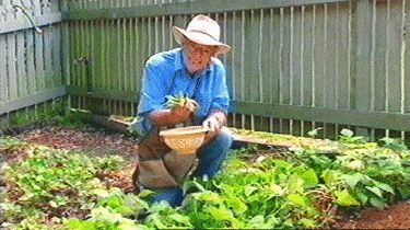 Vege garden planting - autumn in Brisbane