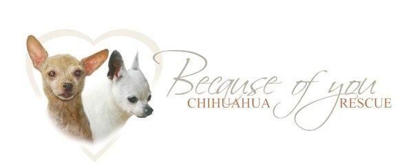 Posh Pooch Designs Dog Clothes: Chihuahua Rescue Fund Raiser- March 2013