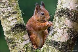 Afbeeldingsresultaat voor grappige eekhoorn