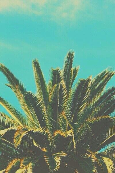 Group Of Palm Trees Tumblr Leaves Wallpaper