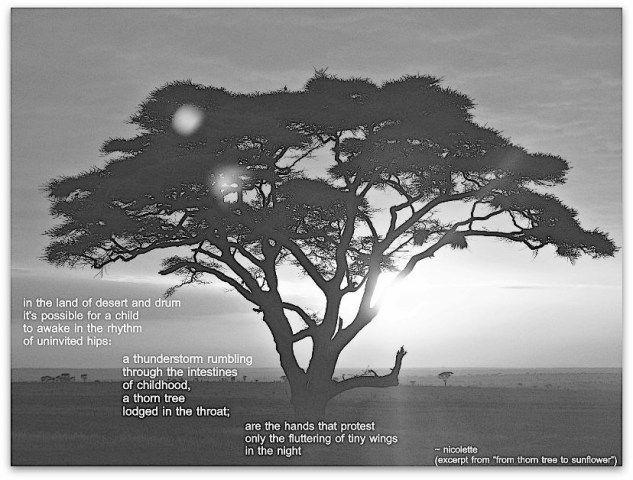From thorn tree to sunflower © Nicolette van der Walt