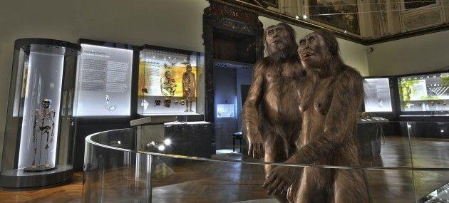 Naturhistorisches Museum Wien - Naturhistorisches Museum