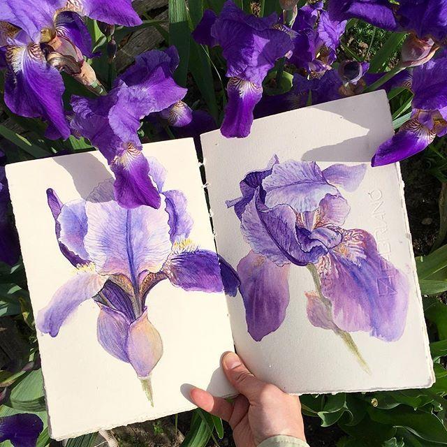 Mom's garden is the prettiest. 🔮 Насколько же важно поймать хорошую погоду с правильным настроем, чтобы хотелось не гулять и есть мороженое, а спрятаться в заросли ото всех со скетчбуком и красками. Никогда особо не фанатка по ирисам, но в этом году они просто восхитительные, огромные и магические! #ollybotanicalsketchbook #ботанический_баттл