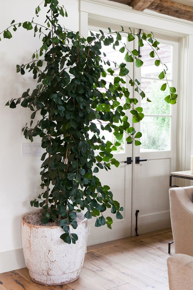 Indoor plant tree gardening pinterest indoor plants and living rooms for Living room with indoor plants