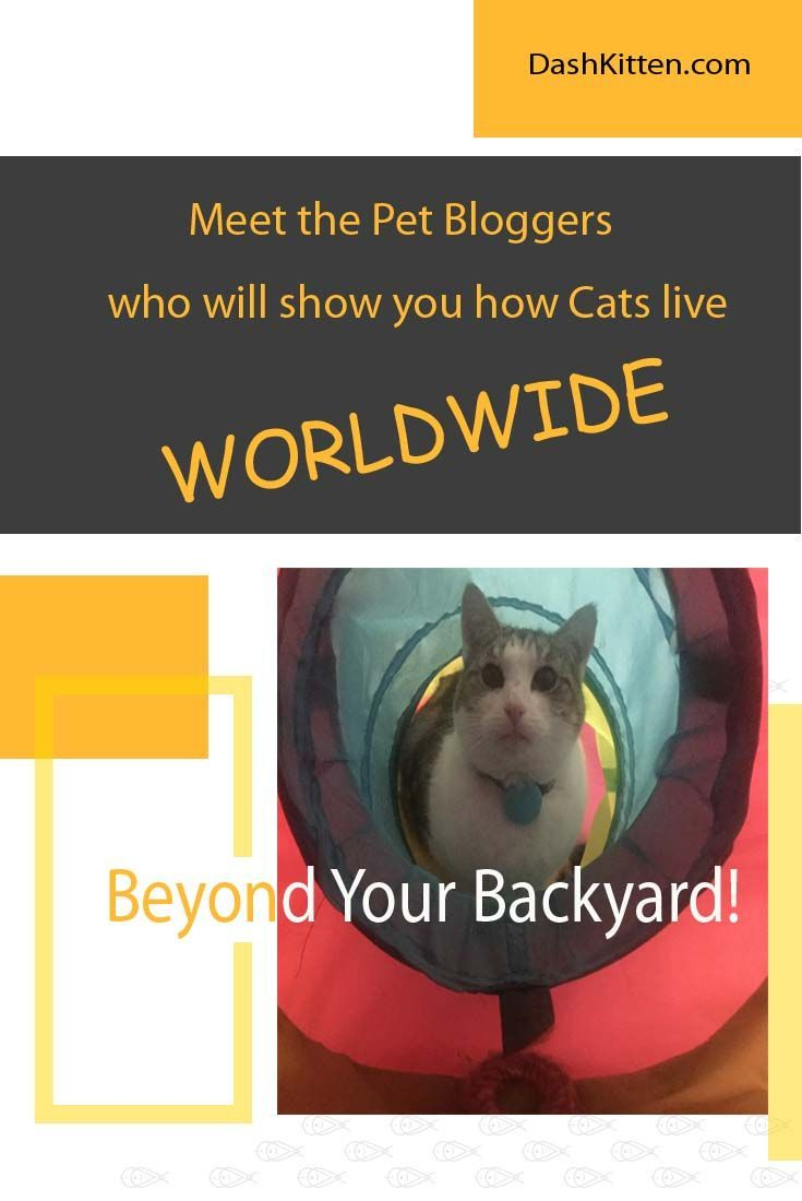 Want to know what lies beyond the blue horizon of blogging with pets? Check our list of some of the coolest cats interviewed around the globe. Our list grows and grows and is a lot of fun to explore!