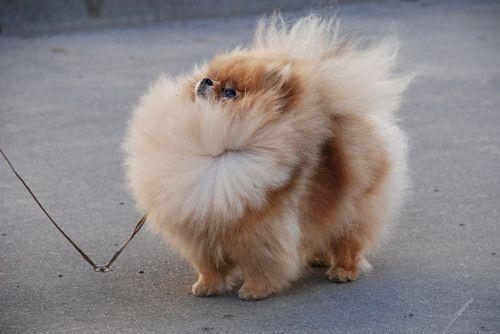 #cute #dog #puppy