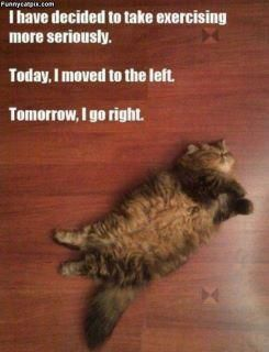 I have a cat that thinks like that too!Funny, Workout Plans, Fat Cat, Sunday Brunches, Exercies Routines, Exercise Routines, Weights Loss, Army Plans, New Years